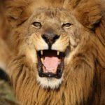 【サイト構築②】 LION MEDIAは標準機能やプラグインが充実した無料テーマ。SEO対策やカスタマイズのポイントを紹介。