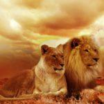 【LION MEDIA】 9つの厳選したカスタマイズ内容をまとめました!「LION MEDIA」を使用されている方は必見!