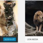 【LION MEDIA】 親テーマと子テーマのインストール手順を分かりやすい画像で説明!