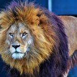 【LION MEDIA】 本サイトの実例に沿ったテクニック豊富な効果の高いカスタマイズ手順紹介!